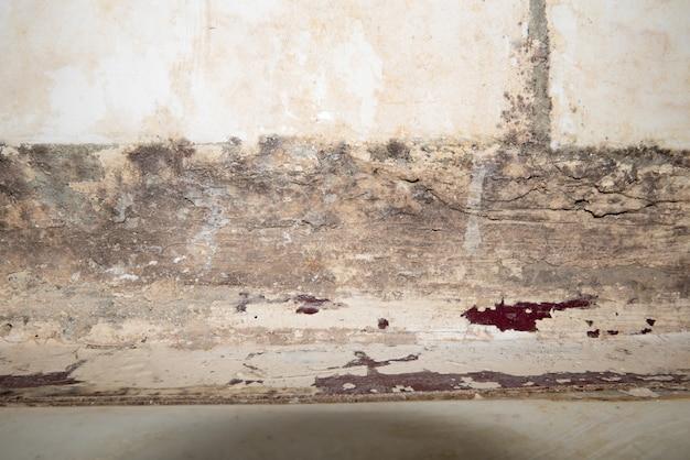 Grote natte plekken en scheuren en zwarte schimmel op de muur