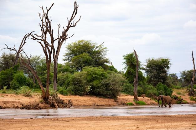 Grote olifant wandelen langs de rivier