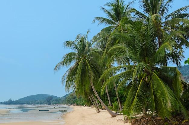 Grote palmbomen op het strand