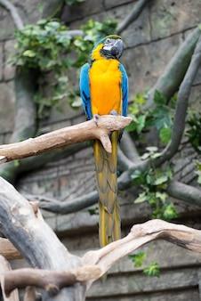 Grote papegaai macaw zittend op de tak.
