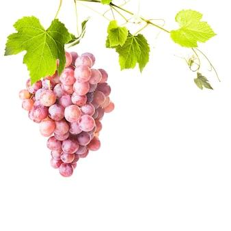 Grote rode druiven met groene bladeren geïsoleerd op een witte achtergrond