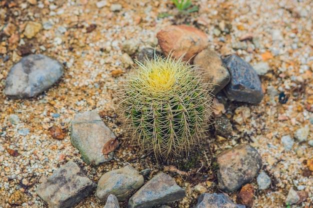 Grote ronde cactus in een tropisch park