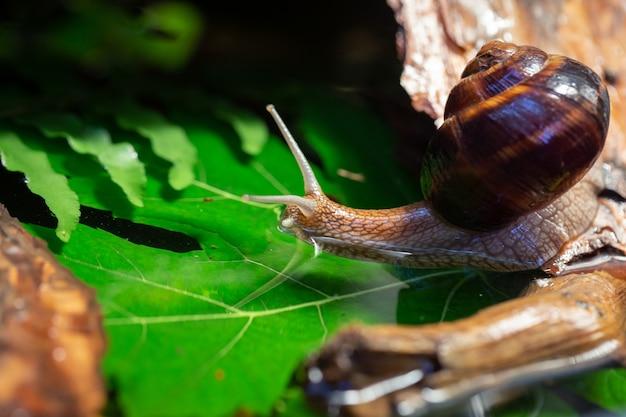 Grote slakken kruipen langs de schors van een boom.
