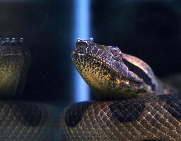 Grote slang close-up