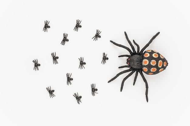 Grote spin met kleintjes