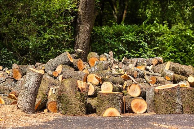Grote stapel houtblokken op een groene bosachtergrond