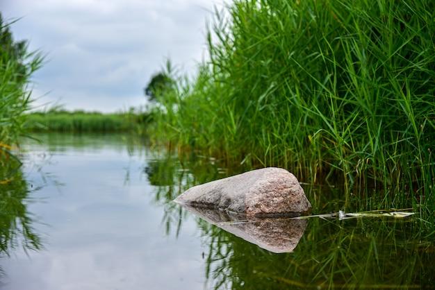 Grote steen in het meer tussen het riet.