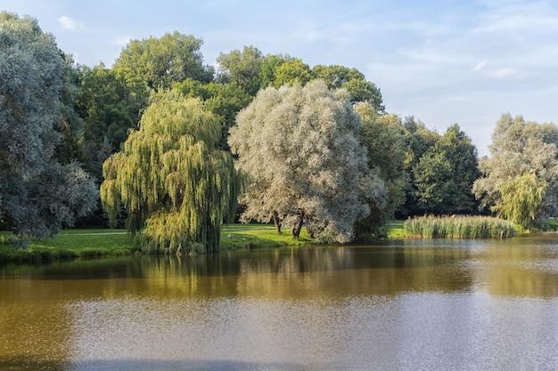 Grote uitgestrekte wilg op het meer in het park