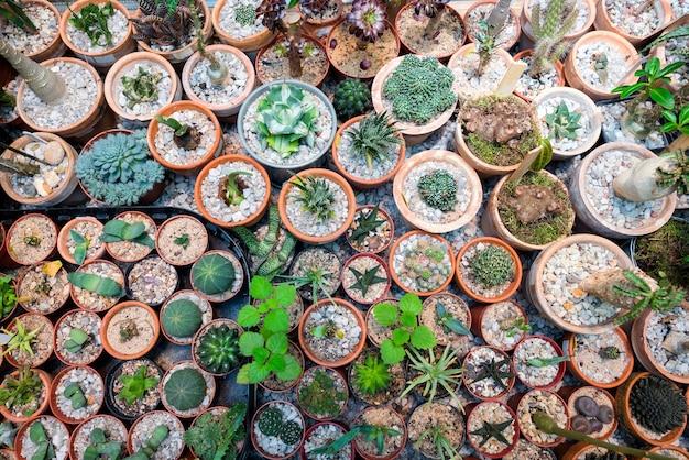 Grote verscheidenheid aan cactusbloemen in de potten op tafel van bovenaf.
