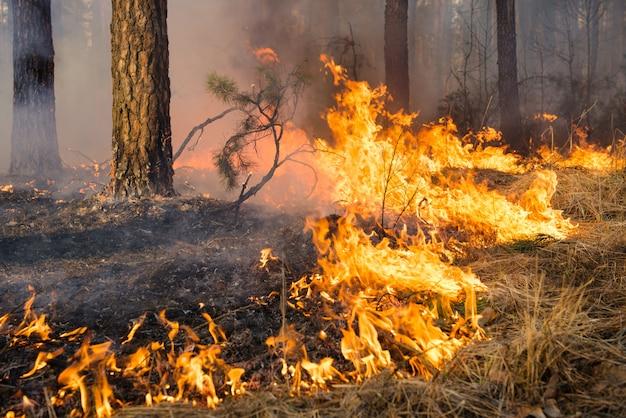Grote vlam op bosbrand