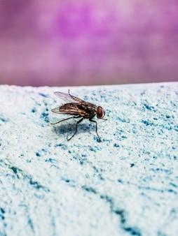 Grote vlieg op een blauw. de vlieg is een drager van infecties