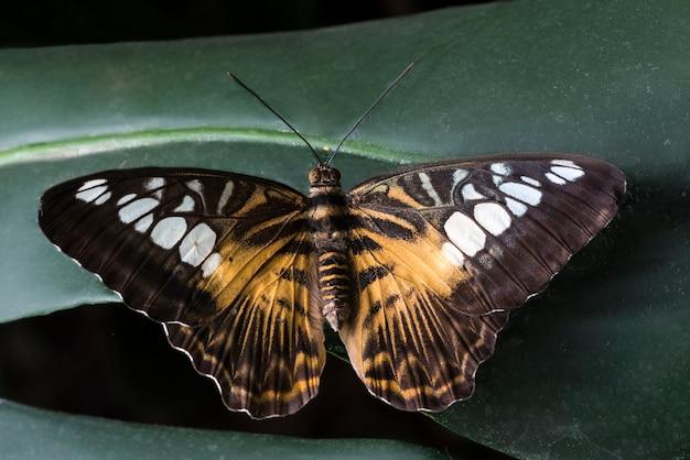 Grote vlinder geplaatst op bladeren