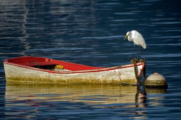 Grote zilverreiger op een rode boot