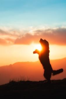 Grote zwarte hond groeide op twee poten in silhouet in een kleurrijke zonsondergang