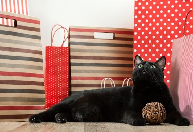 Grote zwarte kat die onder het winkelen zakken legt