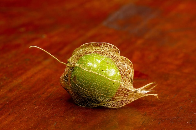 Groundcherry (physalis alkekengi), in het indonesisch bekend als ciplukan, is rijk aan vitamine en goed voor de gezondheid. algemene naam als chinese lantaarn en japanse lantaarn, met droge schors, in ondiepe focus.