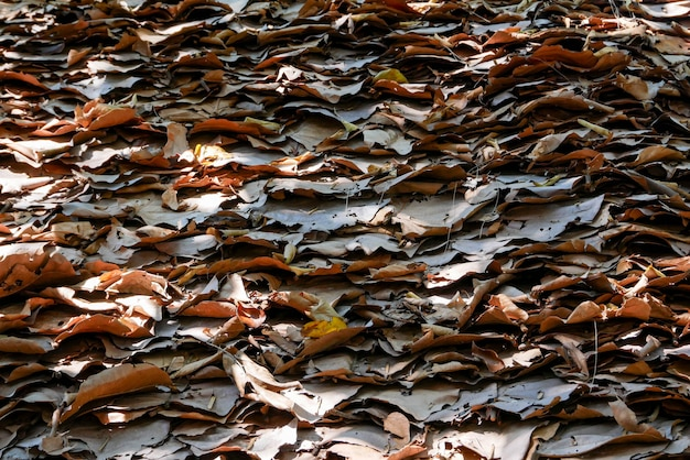 Grungetextuur van de oude bladachtergrond
