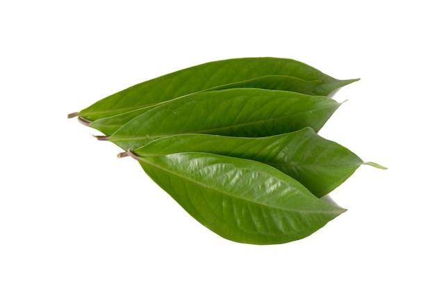 Guaveblad geïsoleerd op een witte achtergrond