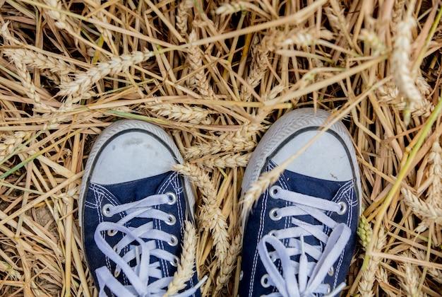 Gumshoes en natuurlijke gouden aartjes van tarwe in juli