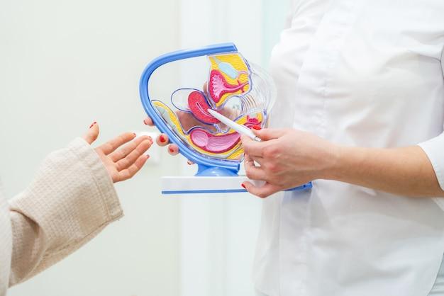 Gynaecoloog arts raadplegende patiënt die het model van de baarmoederanatomie gebruiken