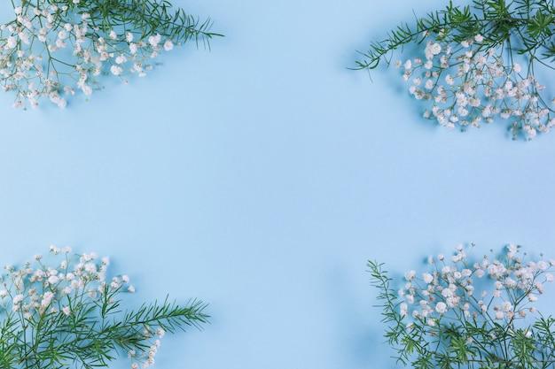 Gypsophila en bladeren op de hoek van de blauwe achtergrond