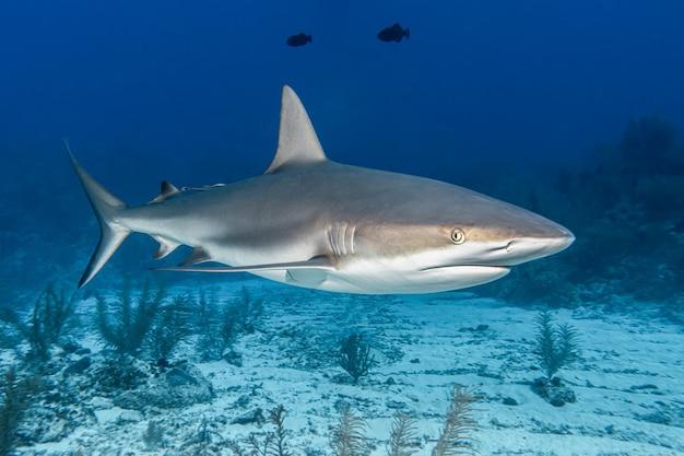 Haai in de zee