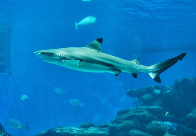 Haaien in groot aquarium in de rode zee zwemmen tussen andere exotische vissen
