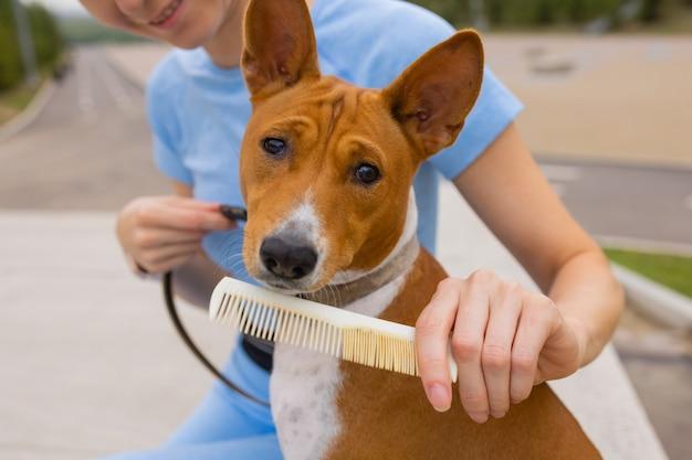 Haar hond basenji verzorgen voor hondenhaar