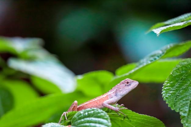 Hagedis wordt verborgen onder bladeren van planten om te ontsnappen aan roofdieren
