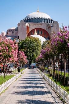 Hagia sophia-moskee tegen de blauwe hemel. een pad met bloeiende en kleurrijke bomen dat leidt naar de hagia sophia-moskee.