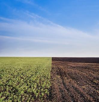 Half geploegd veld met boekweit spruiten en groen gebied van tuinbonen en blauwe hemel