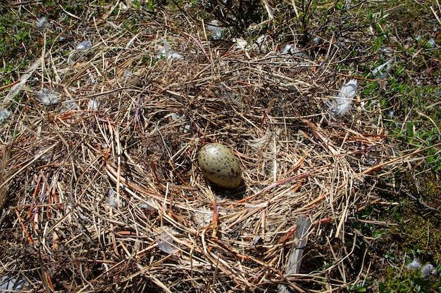 Halfgepalmd pleviernest met één ei omgeven door kleine twijgen