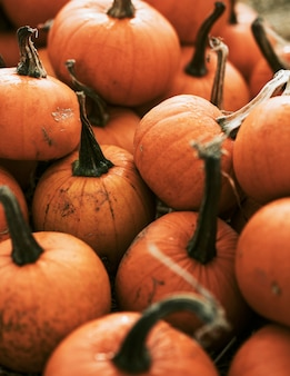 Halloween-pompoen in donkere herfststemming