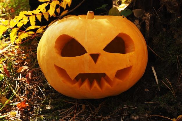 Halloween-pompoen met gesneden enge snuit ter plaatse in het bos.