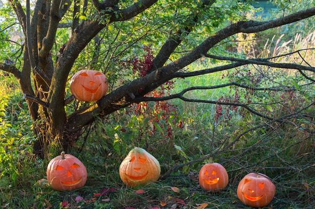 Halloween-pompoenen in avondbos