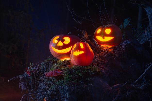 Halloween pompoenen in bos