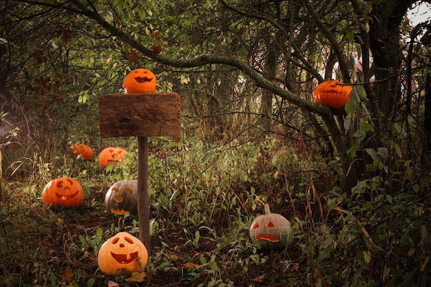 Halloween-pompoenen in een bos