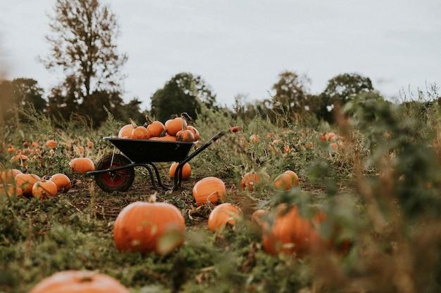 Halloween-pompoenen op een kruiwagenachtergrond donkere herfststemming