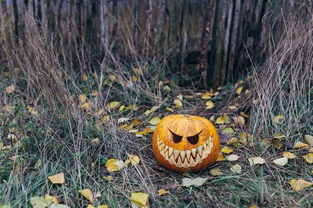 Halloween pompoenen