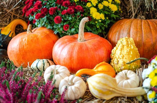 Halloween-pompoenpompoen op een achtergrond van hooi op een rustieke stijlachtergrond voor halloween-plaats voor...