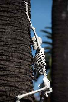 Halloween-skelet. halloween-landschap. vreselijke vakantie thuis. halloween in de vs. tradities en huisdecoratie.