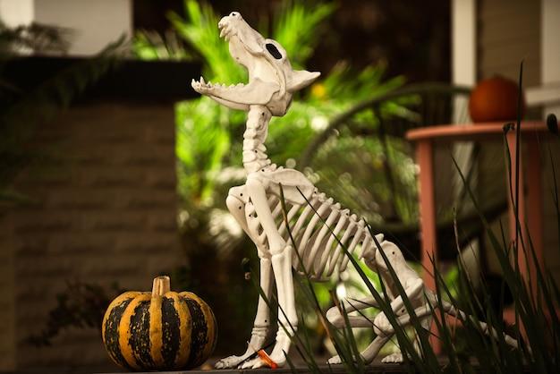 Halloween-skelet van hond met pompoen dichtbij huis.