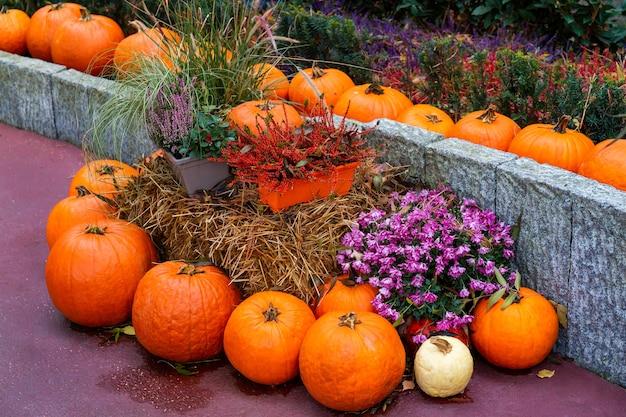 Halloween straatdecoratie. oranje pompoenen en bloemen in een emmer. thanksgiving-decoratie van het huis en de tuin voor de vakantie.