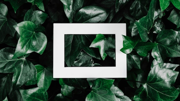 Halveer fotolijst over groene bladplant