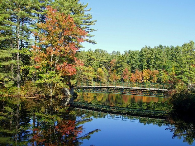 Hampshire bos nieuw bos vijverwater bomen