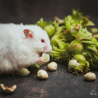 Hamster die hazelnoot zijaanzicht over donkerbruin eten