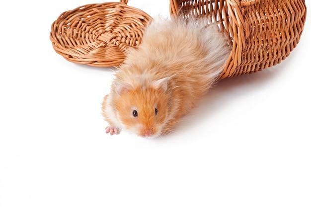 Hamster in een mand geïsoleerd op een witte tafel