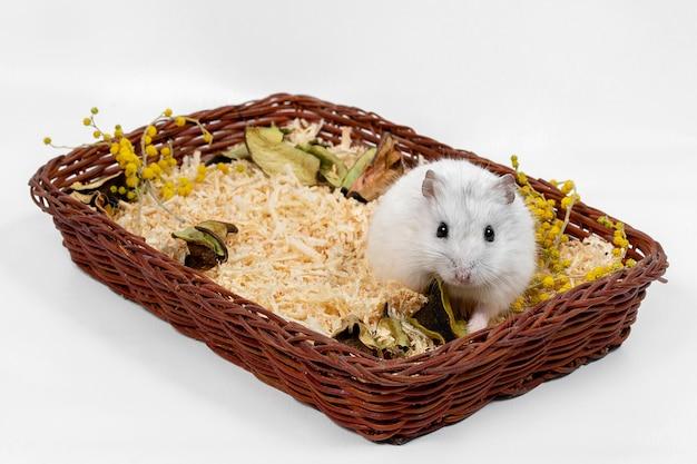 Hamster in een mand niet een witte achtergrond