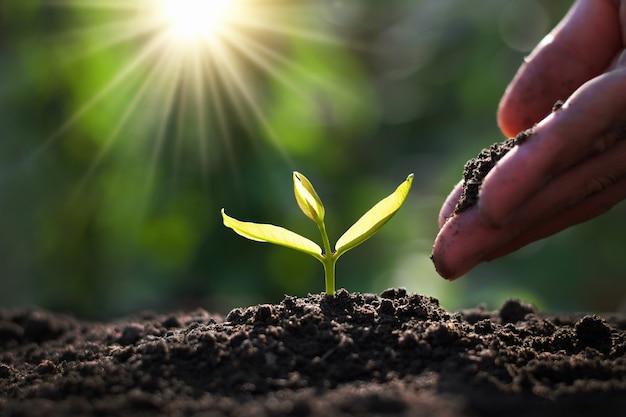 Hand aanplant spruit in de tuin met zonneschijn