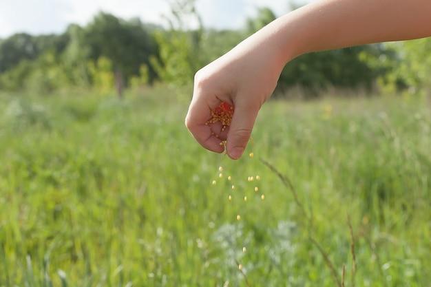 Hand aanplant van bonenzaden van merg in de moestuin. hand groeiende zaden van groente op zaaigrond op tuin metafoor tuinieren, landbouw concept.